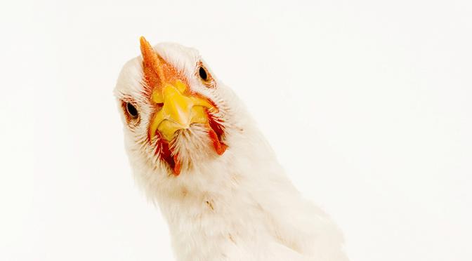 Consommer de la volaille