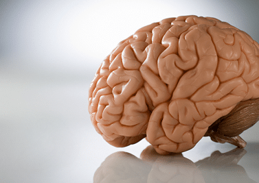 Cerveau : quoi de neuf ?