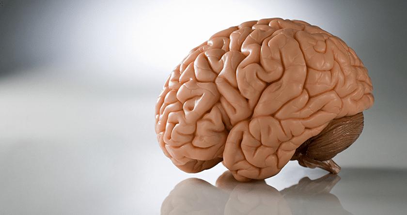 cerveau_quoi_de_neuf