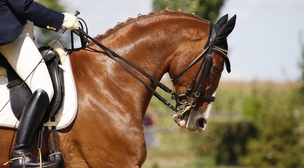 phobie de monter à cheval