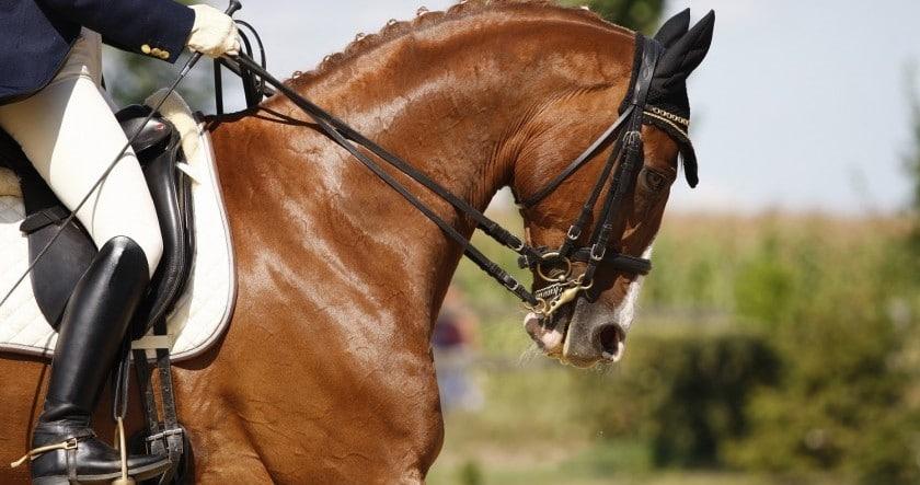 Je n'ai pas peur de monter à cheval