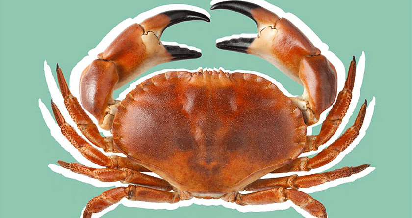Pourquoi cancer = crabe ?