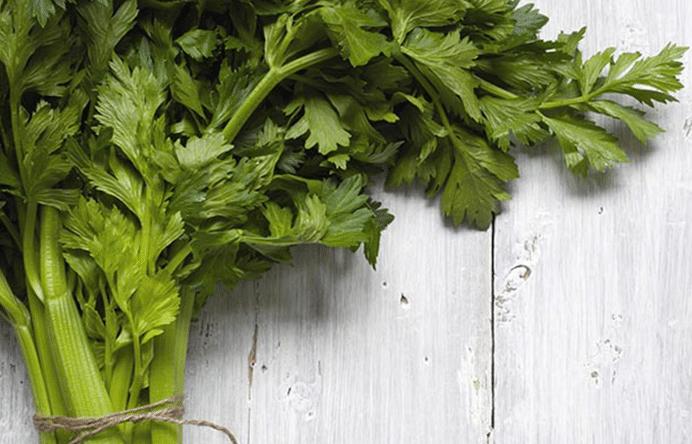 Plante saine et coquine : découvrez les vertus et saveurs du céleri