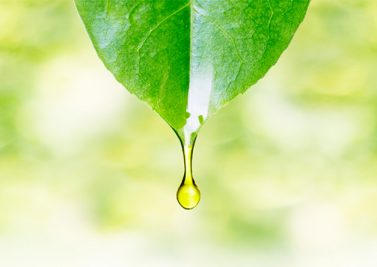 Comment se soigner avec les plantes médicinales et aromatiques ?