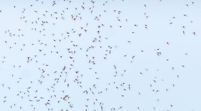 1 million de victimes du paludisme par an dans le monde