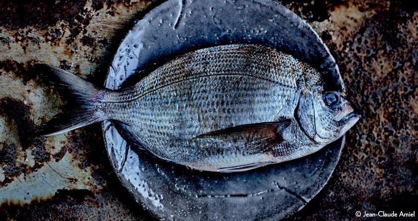 Des recettes de poissons, de coquillages et de crustacés