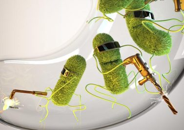 Prébiotiques et flore intestinale : Vers la nutrition 2.0 ?