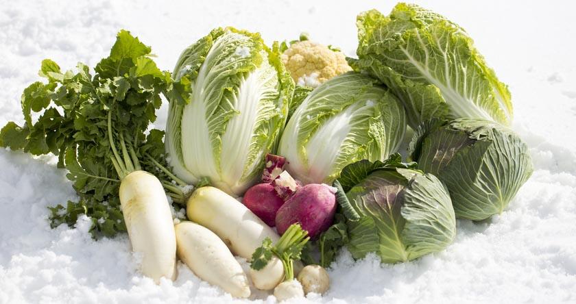 Recettes d'hiver : on passe à l'offensive nutritionnelle !
