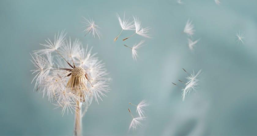 allergie au pollens