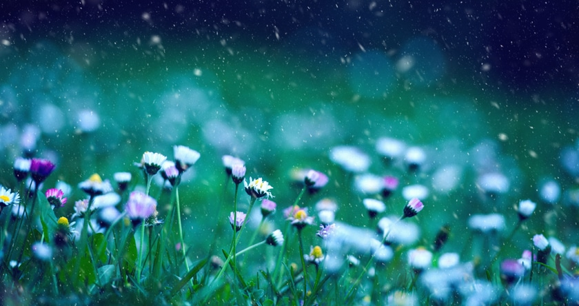 Traitement homéopathique contre les allergies aux pollens