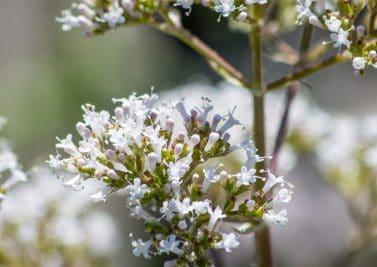 Anxiété légère : pensez aux plantes !