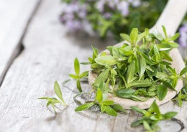La sarriette, une herbe fine qui nous veut du bien