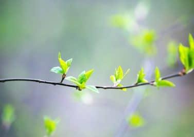 Gemmothérapie : comment se soigner grâce aux bourgeons ?