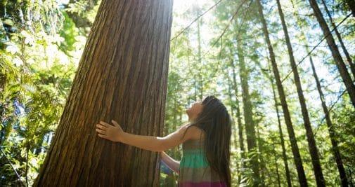 La sylvothérapie, où l'art de soigner en câlinant un arbre