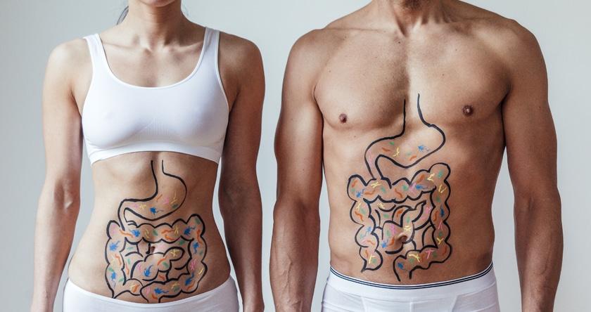 Prébiotiques et probiotiques, le duo gagnant