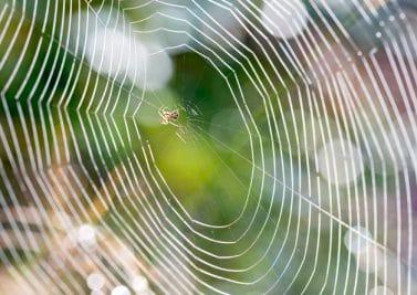 Tuer les araignées de maison : surtout pas !