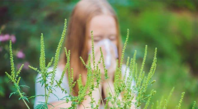 30 % des adultes sont allergiques aux pollens