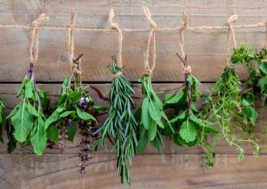 Inhalées, avalées ou appliquées, les plantes nous font du bien