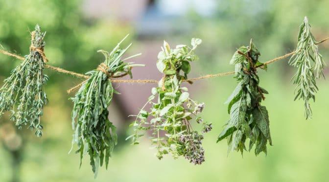 Le top 5 des plantes aromatiques